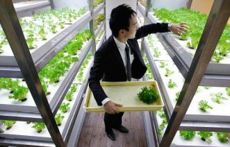 """The Office Farm based in Tokyo Japan, pictured by National Geographic: An employee harvests veggies grown inside an office """"urban farm"""" - Photo Courtesy of the Urban Farm Magazine. Click the picture to find them on facebook."""