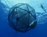 The floating fish farm
