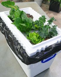Homesteading Self Sufficiency Survival a popular website given the stress of living in today;s world has put forward this great design for a hydroponic system. Using their steps anyone can create a low-cost hydroponic garden at home using basic styrofoam boxes. Click the picture to access these steps, their facebook page and move onto their website