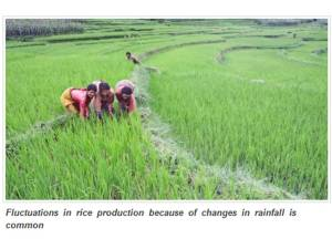Using an old method stepped in agroecology, Indian farmers are battling climate change to effectively grow rice, a staple crop in that region.