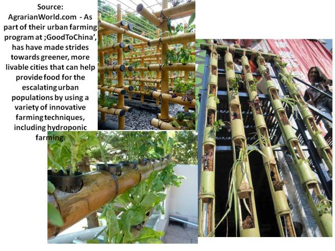 Bamboo Vertical gardens
