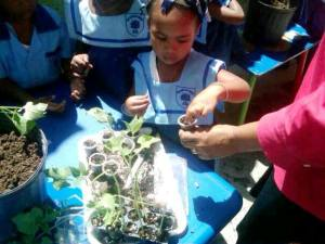Engaging youth from as young as possible in sustainable agriculture. Source: D Smart Farm
